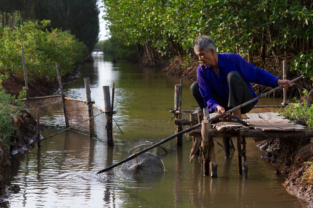 A local farmer pulls a fish trap from the water at his sustainable shrimp farm Bac Lieu Province