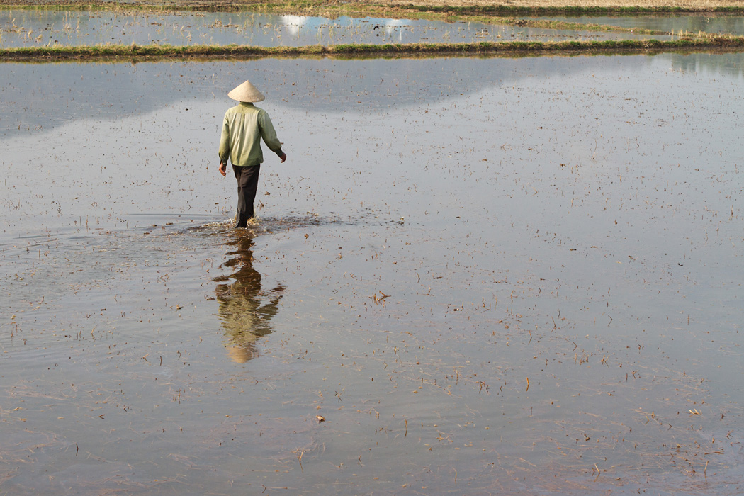 A farmer walks across a flooded rice field in An Giang province.