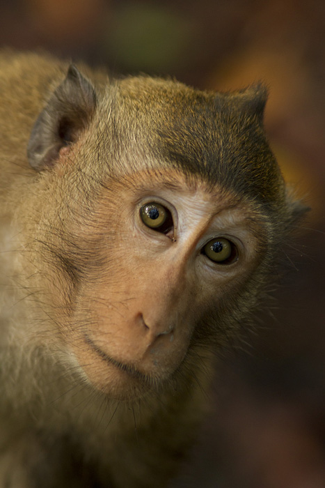A monkey at a bioreserve in Ca Mau province, Vietnam