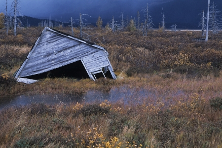 Nature reclaims a house on the Kenai Peninsula