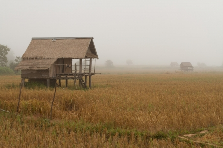 Early morning fog in the rice fields near Hongsa