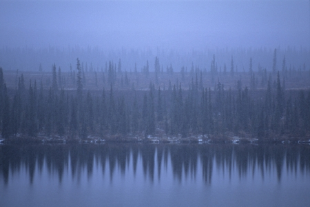 Trees reflected in a lake in a snowstorm just south of Summit, Alaska